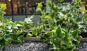 Rośliny Sztuczne - wątpliwa jakość - mit czy prawda?