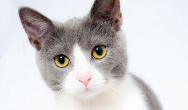 Furminator - nieodzowna pomoc w pielęgnacji zwierzęcej sierści