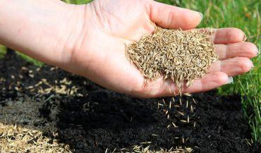 Kiedy siać trawę? Jak i kiedy ją nawozić? Sprawdź!
