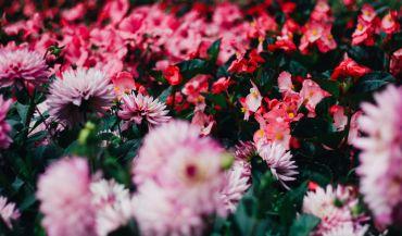 5 sposobów na urozmaicenie Twojego ogrodu
