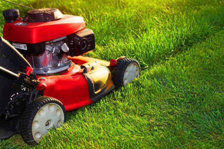 trawa-u-sasiada-jest-zawsze-bardziej-zielona-jak-zadbac-o-przydomowy-trawnik-wiosna2.jpg