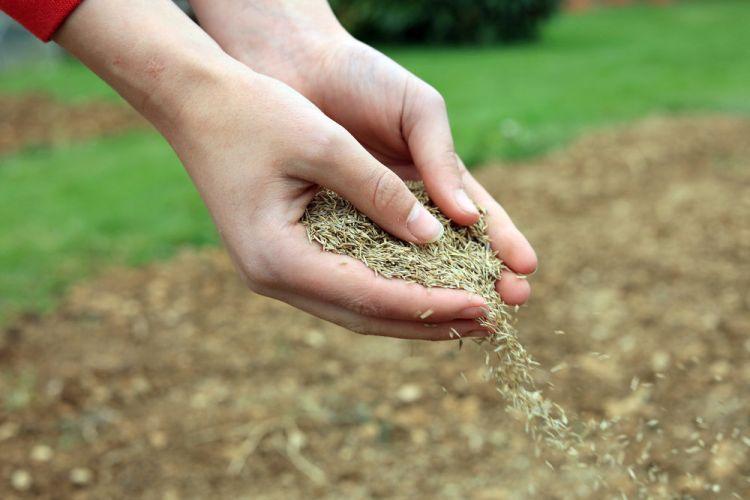trawa-u-sasiada-jest-zawsze-bardziej-zielona-jak-zadbac-o-przydomowy-trawnik-wiosna3.jpg