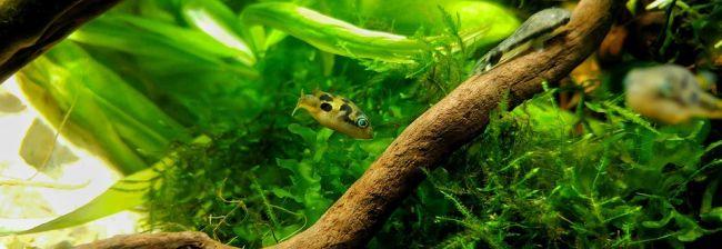 ¿ywe ro¶liny w akwarium